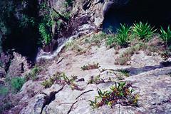 Kinnane's Falls 2 (NettyA) Tags: 1993 australia kinnanesfalls mainrangenationalpark qld queensland bushwalk bushwalking scannedprint scenicrim seqld