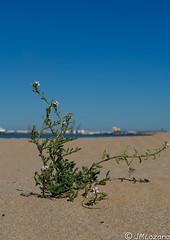 supervivencia (josmanmelilla) Tags: melilla mar playas agua arena sony sol photowalkmelilla photowalk pwmelilla pwdmelilla flickphotowalk pwdemelilla