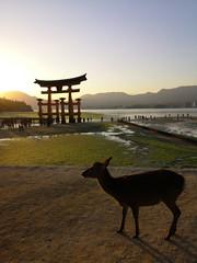 Shika (bruno carreras) Tags: japon japan nippon isla island miyajima isukushima pagoda templo temple torii senjokaku hatsukaichi miyajimacho ciervo deer shika sol sun sunsen aterdecer puerto budismo budist