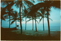 (grousespouse) Tags: vietnam 35mm analog film nikonf3 nikonseriese28mmf28 kodakvision200t cinematic cinema blue colorfilter analogue landscape mood atmosphere surreal fade grain colorfilm beach tropical vintage palmtrees dusk ocean hoian cuadai silhouette grousespouse croplab 2018 wideangle tungsten scanned 28mm f28 vision vision3