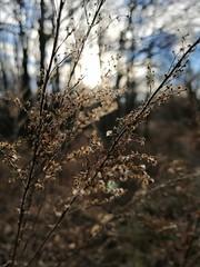 IMG_20181231_134712 (Zsofó01) Tags: erdő mező táj
