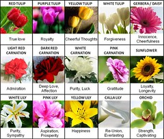The Ten Common Stereotypes When It Comes To Flower Meanings   flower meanings (franklin_randy) Tags: flower meanings chart death lily love peony strength tattoo uk wiki with pictures