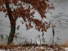 (Gerlinde Hofmann) Tags: germany thuringia village bürden pond tree oaktree snow