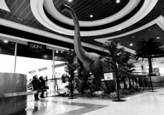So tall ! (Alain Rempfer) Tags: centrecommercial shoppingcenter magasin shop streetphotography candidphotography candidportrait candidsnapshot emotion face visage publicspace espacepublic scenedevie urban portraiture viequotidienne dailylife photographienonposée unposedphotography panasonicdmcsz10 enfants children dinosaure dinosaur