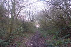 Old railway cutting between Athersley and Carlton, Barnsley. (former Carlton branch line)   January 2019 (dave_attrill) Tags: cutting athersley north branch carlton disused railway line trackbed remains abandoned footpath barnsley southyorkshire yorkshire grass trees overgrowth vegetation january 2019