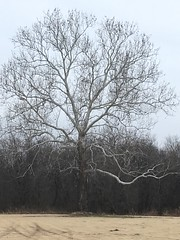 20190116-115045-3 (alnbbates) Tags: january2019 sapulpa tree hdr