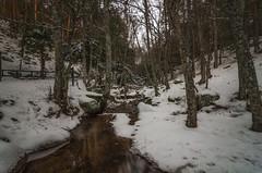 Invierno. (Amparo Hervella) Tags: puertodecanencia comunidaddemadrid españa spain paisaje árbol naturaleza nieve río agua largaexposición d7000 nikon nikond7000