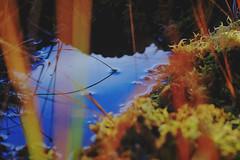 Mire (Klas-Herman Lundgren) Tags: dalarna sweden gimmen autumn höst forest trees skog october red leaves colors ground skogsmark mire myr myrmark sifferbo se