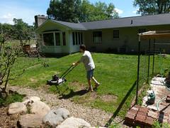 P1080947 (LPompey) Tags: garden strawbale corkscrewhazelnut hazelnut