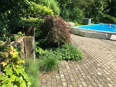 """Zireg Ziswiler gehört zur TOP 10 des bsw-Awards 2018 in der Kategorie """"Vorher - Nachher"""". (Bundesverband Schwimmbad & Wellness) Tags: bswbundesverbandschwimmbadundwellness bswaward pool pools schwimmbad schwimmbäder"""