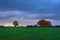 Rain on the way (Ugborough Exile) Tags: gnosall stafford staffordshire midlands england uk sony rx100iv 2018 treesdiestandingup trees
