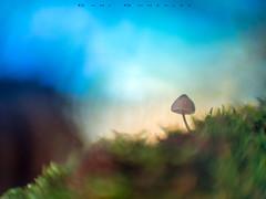 Circular bokeh (www.studio360fotografia.es) Tags: verde 16kp 50mm 12 seta mushroom fungi bokeh desenfoque nature naturaleza fantasia circular olympus omd em10 fantasy