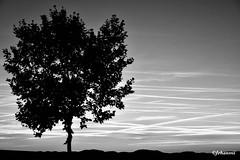 N&B (Jehanmi) Tags: nikond7200 nikon naturephotography thebeautyofnature dreamscape trees arbre nuage cloud sky ciel bnw bw nb blackandwhite noiretblanc