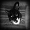 Dracul (Creepella Gruesome) Tags: gomez animal feline cat tuxedocat fangs blackandwhite squareformat spooky phantasm iphone6splus hipstamatic