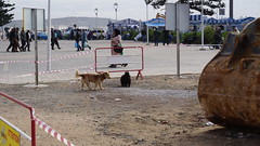 2016-01-08_13-46-27_ILCE-6000_DSC02481 (Miguel Discart (Photos Vrac)) Tags: 2016 75mm chien citytrip dog dogs epz1650mmf3556oss essaouira focallength75mm focallengthin35mmformat75mm holiday ilce6000 iso100 maroc morocco sony sonyilce6000 sonyilce6000epz1650mmf3556oss travel vacance vacances voyage