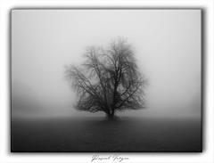 the mist-Déc18-001 (photographe 60) Tags: ambiancehivernale brumeetbrouillard landscapephotography naturemorte noiretblanc pascalvergnephotographeoise paysagedefrance