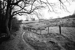 06 Path, tree, fence (I ♥ Minox) Tags: film 2018 olympus om1 om1n olympusom1n olympusom1 om172 tmax tmax400 kodaktmax400 monochrome blackandwhite