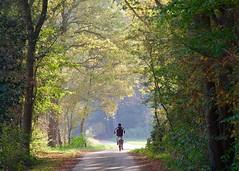 (andzwe) Tags: reza shadow light forest bike dark path road panasonicdmcgh4 dren zuidwolde intothelight