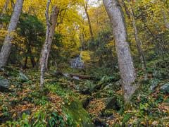 Fern Branch Falls, Great Smoky Mountains National Park, Tennessee (netbros) Tags: greatsmokymountainsnationalpark tennessee porterscreektrail greenbrier fernbranchfalls fallcolor netbros internetbrothers