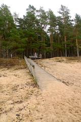 Holzweg zum Wald (claudipr0) Tags: lettland baltikum latvia strand ostsee sea beach balticsea kiefern birken birch pinetrees saulkrasti