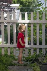 Inspecting the New Garden Gate (milfodd) Tags: july 2018 phaedra fay gardengate garden
