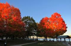 Colorful Trees (Larry Myhre) Tags: fallfoliage colorful trees bath maine