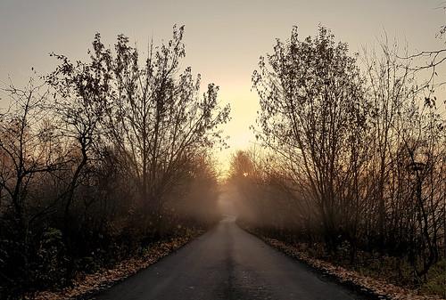 autumn fog ©  Sergei F