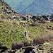 Sheikh Mountain