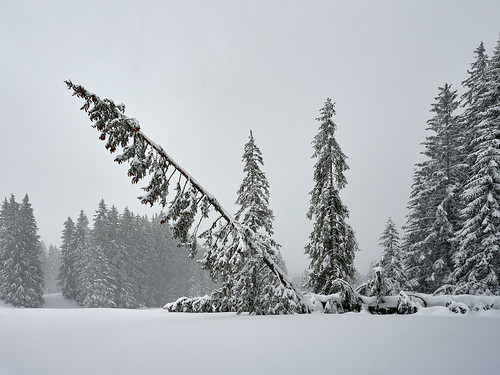 TOO MUCH - Heavy Snow - Winter in Bavaria