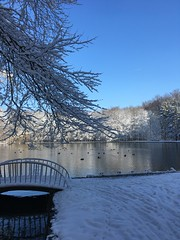 ❄️ (Saskia Becker) Tags: germany wald trees water see wasser animals dug enten brücke februar schnee bridge snow winter