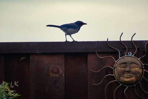 2019-01-14 - Nature Photography, Birds