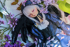 "{ROZEN MAIDEN} 水銀燈 ""The First Rose"" (koalakrashdolls) Tags: doll dolls bjd balljointeddoll ball joint jointed volks sd superdollfie super dollfie nana sweetdream koalakrash koala krash rozen maiden rozenmaiden 水銀燈 suiginto suigintou suigintô"