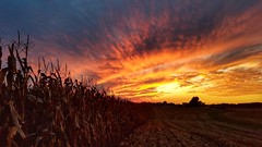 before the harvest.... (BillsExplorations) Tags: sunset silhouettes fireinthesky sky dusk harvest field cornfield illinois countrysky rural