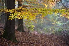 Quand la nature se prépare à l'hiver (Excalibur67) Tags: nikon d750 sigma globalvision art 24105f4dgoshsma paysage landscape arbres trees forest foréts feuillage foliage nature automne autumn
