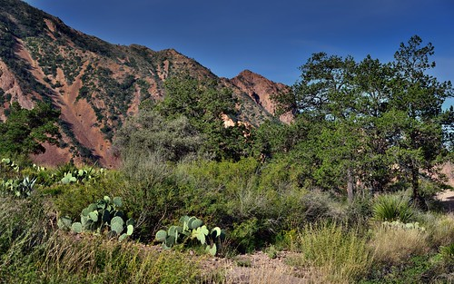A Mountainside as a Backdrop for Plantlife in the Chisos Basin (Big Bend National Park)