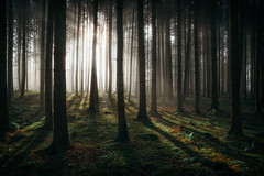 I could stay here forever (der_peste (on/off)) Tags: raysoflight sunrise godrays crepuscularrays sunbeams forests bavarianforest forestscape trees