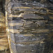 New Albany Shale (Upper Devonian; MacDonald Knob Outcrop, Bullitt County, Kentucky, USA) 3