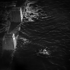 Swimmers Affair (Bass Photography) Tags: coogee coogeebeach sydney australia newsouthwales australiansuburbs blackwhite water sea bay beach sunrise infraredphotography infrared irimages