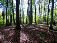 Covert Woods, Elham Valley (Alex-397) Tags: kent countryside scenery landscape uk england britain