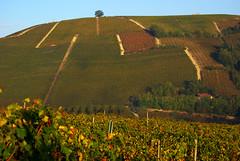 Neive collina 1 Langhe 18 (zanf89) Tags: neive alba langhe piemonte colline vino barolo nocciole