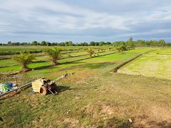 Rice paddies in Phon Phisai 2 (SierraSunrise) Tags: agriculture esarn farming grain isaan nongkhai paddyrice phonphisai pumps rice ricepaddies ricepaddy thailand