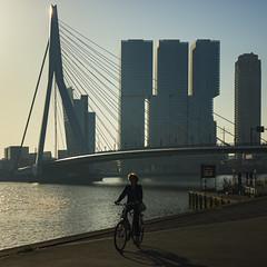Netherlands - Rotterdam - Waterfront 01_sq_DSC8893 (Darrell Godliman) Tags: netherlandsrotterdamwaterfront01sqdsc8894 officeformetropolitanarchitecture derotterdam skyscraper erasmusbridge erasmusbrug city cityscape rotterdam netherlands holland europe bike biker cyclist sq bsquare squares squareformat oma