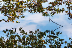 Reflections (George Plakides) Tags: reflections leaves branches trees lake water sky clouds kastoria autumn colours