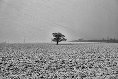 Blizzard on Windy Edge _G5A5787 (ronniefleming@btinternet.com) Tags: blizzard snow windyedge tibbermore perthshire oaktree a9ph31fyronniefleming winter2018 pylons trees silhouette fields ploughed