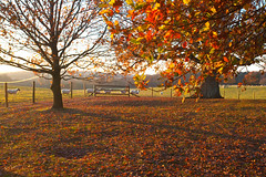 November Autumn @ Sheffield Park (Adam Swaine) Tags: sussexlandscape sussex sheffieldpark theweald autumn autumncolours autumnviews beautiful flockofsheep sheep england english englishlandscapes britain british canon trees leaves seasons uk ukcounties rural walks nature nationaltrust