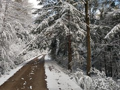 2018-FS-Allegheny-KC (Allegheny National Forest) Tags: winter allegheny national forest pennsylvania road