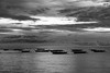 The Boats (Luckysnare) Tags: cebu oslob philippinetourism places sumilon whalesharkwatching butanding
