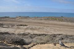 海兵隊演習場 (yuki_alm_misa) Tags: カリフォルニア 演習場 california lasfloresviewpoint usmccamppendleton theunitedstatesmarinecorps 西海岸 usmc アメリカ海兵隊