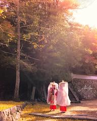 Pilgrimage at the Shinomiya Shrine (Miyajima, Japan 2015) (Alex Stoen) Tags: alexstoen alexstoenphotography autumn fall geotagged leicamptyp240 ngexpeditions natgeo nationalgeographicexpeditions summiluxm35mm travel vacation japan