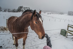 Horse (real.jtj) Tags: